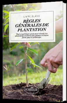 Règles générales de plantation